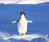 Fluvanna Penguin Plunge